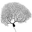 Dendrite Research picture